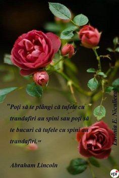 S Quote, Abraham Lincoln, Decir No, Rose, Plants, Jenni, Heart, Beautiful, Truths