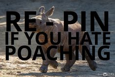 Please re-pin if you hate poaching.