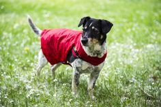 Regenmantel für Hunde aus Regenschirmbespannung inkl. Anleitung / Raincoat for dogs made from umbrella / Upcycling