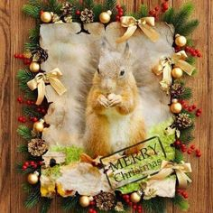 Christmas Squirrel, Merry, Animals, Animais, Animales, Animaux, Animal, Dieren