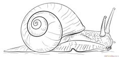 How to draw a Snail   Step by step Drawing tutorials
