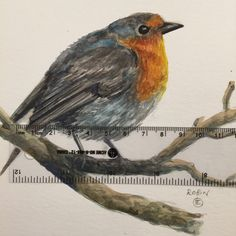 You don't have a home either little Robin? I'll tell All my friends...and maybe they would like to give you a home.                      Www.instagram.com/shopblueshineart #blueshineart #original #art