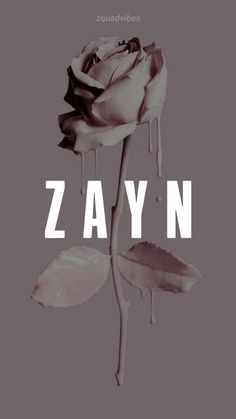 Zayn One Direction, One Direction Wallpaper, One Direction Pictures, Zayn Malik Style, Zayn Malik Photos, Aesthetic Backgrounds, Aesthetic Wallpapers, Zayn Malik Drawing, Zayn Malik Smiling