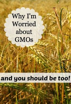 Why I'm worried about GMOs - and why you should be too!  All we ask for is labeling!  Here's how you can help with the effort to get foods labeled!