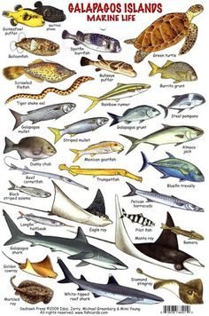 Ocean Creatures, Weird Creatures, Saltwater Aquarium Fish, Freshwater Aquarium, Animal Dictionary, Fish Chart, Colorful Fish, Tropical Fish, Underwater Pictures