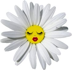 See the PicMix floare belonging to ciucurel on PicMix. Gifs, Daisy, Happy Week, Beautiful Gif, Gif Pictures, Clip Art, Animation, Florals, Artist
