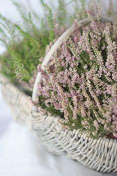 Pretty* in a basket