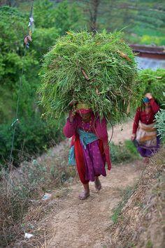 documentary photography Nepal   ... fields near Bungamati Village, Nepal, Kathmandu   Gunther Deichmann