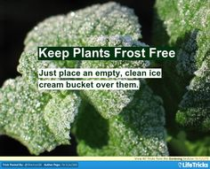 Keep Plants Frost Free