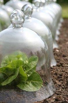 Glass cloches ~ so pretty and useful!