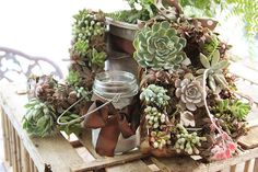 """such a cute idea! and I love succulants!!  great tips on here too for caring for the plants. THE MOST PERFECT TUTORIAL and PHOTOS and plant lists!  So glad I found this PIN!  """"Winning!"""""""