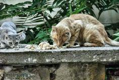 Kediler , Cats , Anilmal , Tekirdağ , Pestemalcı