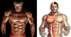 3 Golden Rules for Maximal Muscle Growth