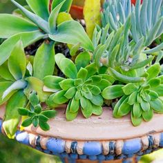 Succulents overflow a 1920s drinking-fountain-turned-planter.