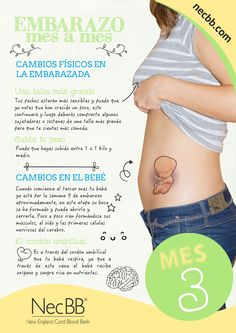 """infografía para pinterest NecBB """"El embarazo mes a mes"""" (Mes 3)"""