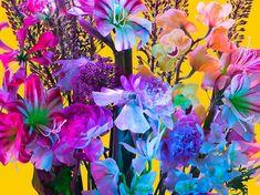 Em sua série fotográfica, Torkil Gudnasson mostra que tudo é uma questão de forma e efeitos de luzes, transformando simples flores em imagens fascinantes.
