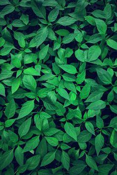 New Aesthetic Wallpaper Green Plants Ideas Plant Wallpaper, Green Wallpaper, Nature Wallpaper, Wallpaper Backgrounds, Trendy Wallpaper, Green Leaves, Plant Leaves, Green Pictures, Green Nature