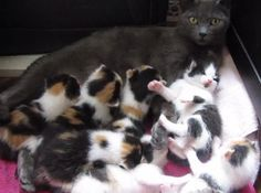 They Rescued This Mama Cat And Her 8 Kittens, But Never Expected What They Saw! AMAZING… | The Meow Post
