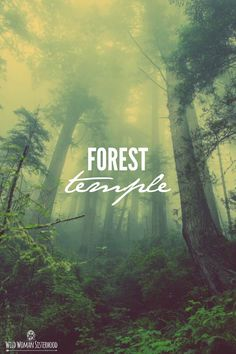 The forest is my temple, my peace, and my solitude.