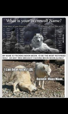 Moon Moon the Retarded Wolf, everyone! But seriously, I am NOT a retarded wolf -cough- Prilla -cough- Cecil -cough- Funny Dogs, Funny Animals, Cute Animals, Funny Memes, Funny Husky, Silly Jokes, Moon Moon Memes, Funny Cute, The Funny