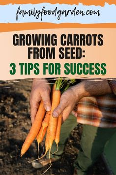 To grow carrots successfully, Family Food & Garden offers 3 important tips that when followed will give you the results you seek. Don't limit yourself to orange carrots. There are a variety of different colorful and quite delicious carrots you can grow in your garden. These are easy tips that help avoid certain pitfalls that can affect both flavor and appearance of these vegetables, including germination ideas. Learn more… #successfullygrowcarrots #tipstogrowcarrots #carrotsinyourgarden Growing Carrots From Seed, Healthy Fruits And Vegetables, Family Meals, Gardening Tips, Seeds, Personal Taste, Colorful, Orange, Garden Ideas