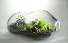 Terrariums & moss scapes