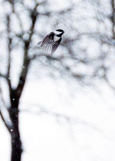 Ruth Burts Interiors: snow whites.  In flight