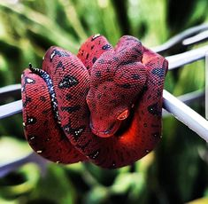 Reptiles Names, Les Reptiles, Cute Reptiles, Reptiles And Amphibians, Pretty Snakes, Beautiful Snakes, Terrarium Reptile, Baby Snakes, Chameleon Lizard