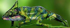 Esse camaleão, na verdade, são duas mulheres pintadas - IdeaFixa