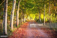 Stock Photo : Country Road in Dorset