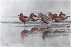 Coalition for the Trip (Bar -Tailed Godwits) - Lars Jonsson - oil Watercolor Sketch, Watercolor And Ink, Animal Posters, Bird Drawings, Wildlife Art, Bird Art, Pattern Art, Landscape Art, Beautiful Birds