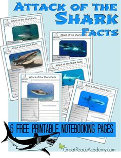 Attack of the Shark Facts Notebooking Pages at Great Peace Academy, education, shark study,