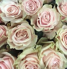 Pink mondial roses: all year $$