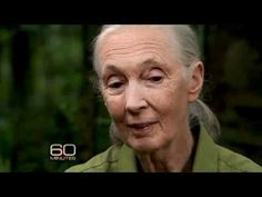 Jane Goodall and Her Chimps 4.2 in pearson success