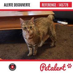 Cette Alerte (145778) est désormais close : elle n'est donc plus visible sur la plate-forme Petalert Suisse. L'animal a pu être remis à son propriétaire Merci pour votre aide. Visible, Aide, Cats, Switzerland, Thanks, Shape, Animaux, Gatos, Kitty Cats
