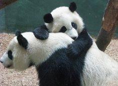 http://www.buzzfeed.com/summeranne/17-of-the-warmest-sweetest-bear-hugs