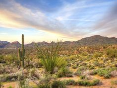 Arizona #honeymoon destination for the adventurous couple!   Rock climbing, mountain biking, horseback riding and even guided astronomy tours are all available here.