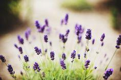 flowers and purple Bild