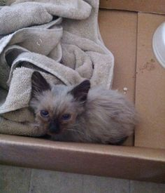 dirty stray kitten rescued what love can do