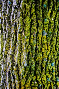 Tree Bark by Taylor Barba on 500px