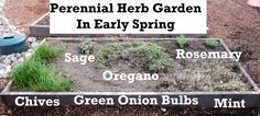 Now is the time to spruce up your perennial herb gardens!
