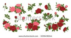 Big set of yellow and red roses, bouquets, flowers and buds.