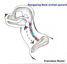 Dog anatomy neck