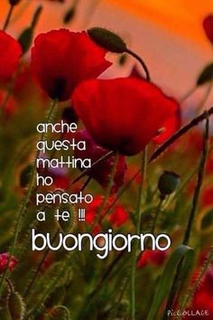 Italian Greetings, Famous Phrases, Morning Greeting, Start The Day, Good Thoughts, Planting Flowers, Good Morning, Genere, Sicilian