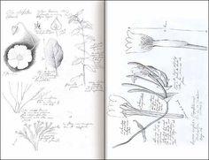 como hacer un diario de la naturaleza para niños - Buscar con Google