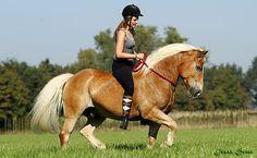 Riding bareback and bridleless Bareback Riding, Horse Riding, Haflinger Horse, Palomino, Horse Ears, Free Horses, Funny Horses, Natural Horsemanship, Draft Horses