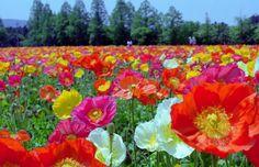 【宮崎】生駒高原&えびの高原のピクニックで立ち寄りたいスポット7選