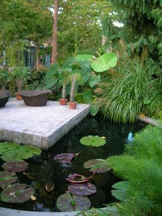 Building a Koi Pond Veggie Waterfall Filter, large, lush, dense tropical plants, elephant ears