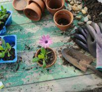 Balkon Bepflanzen Und Sich über Einen Prächtigen Garten Freuen