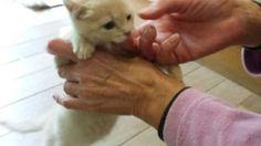 Cucciolo di gatto si regala